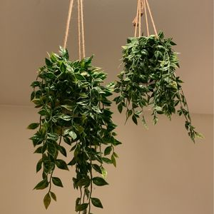 Fake hanging plants! for Sale in Beverly Hills, CA