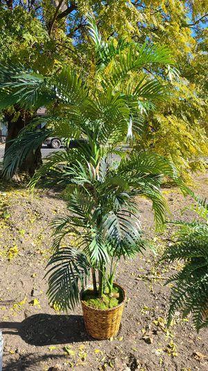 Tree for decoración for Sale in Stockton, CA