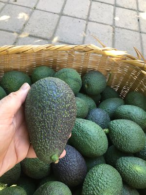 Organic Large Hass Avocados for sale $1.00 ea Organic Large Hass Avocados. The miracle fruit.Picked at the right time to achieve that nutritious and for Sale in Los Angeles, CA
