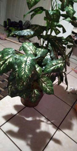 Fake plant for Sale in Avon Park,  FL