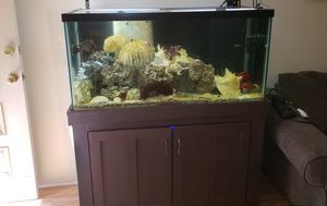 110 g aquarium with stand filter and stuff for Sale in Tujunga, CA