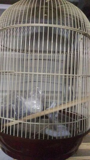 Bird cage new for Sale in Suitland, MD