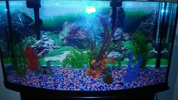 Aquarium-Fish tank