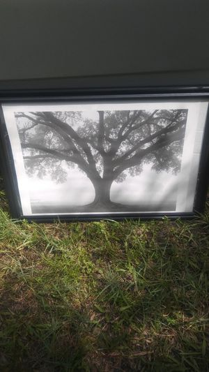 Picture. W/black frame for Sale in Palm Harbor, FL
