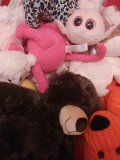 Teddy bear lover? for Sale in Sudbury, MA