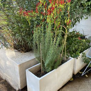 2 Planters For Sale. for Sale in Beverly Hills, CA