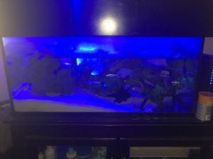 55gal fish tank for Sale in Corona, CA