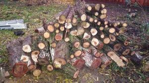 Free a lot of fire wood for Sale in Concord, CA