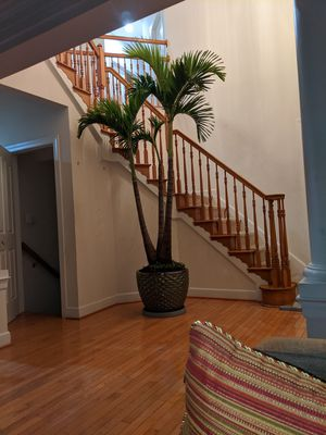 live Christmas plan tree 7-10 foot for Sale in UPR MARLBORO, MD