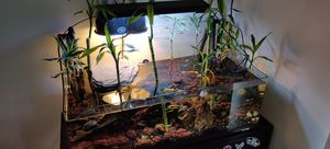 Beautiful Aquarium turtle fish tank for Sale in Garden Grove, CA