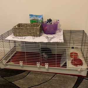 9 Month Old Norwegian Dwarf Rabbit for Sale in Madison Heights, VA