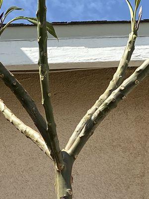 Árbol de plomería nueve pies de altura🌼🌸 for Sale in Los Angeles, CA