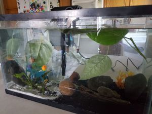 10 gallon and 1.6 gallon fish tanks for Sale in Sun Valley, NV