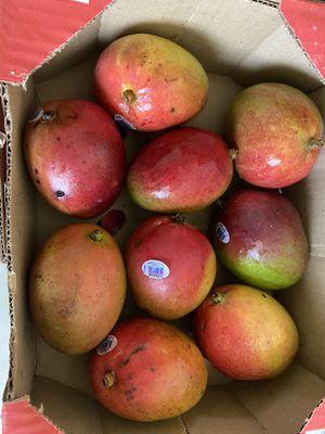mangos !! for Sale in Cutler Bay, FL