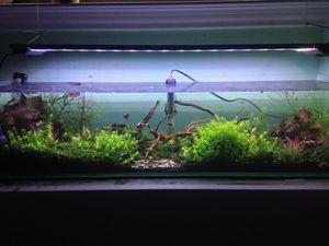 12 gallon aquarium for Sale in Round Rock, TX