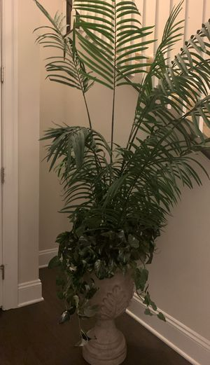 Tree plant for decoration for Sale in Morgantown, WV