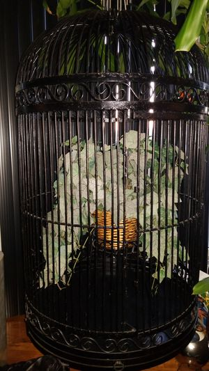 Wrought iron bird cage for Sale in Staten Island, NY