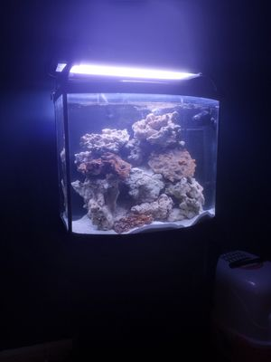 35 gallon tank no rock or light included for Sale in Huntington Beach, CA