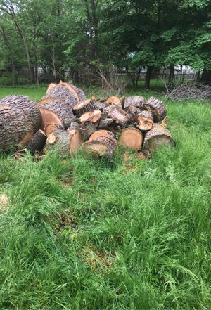 Silver Maple Fire wood. 12 to18 inches. Ready to burn. 5 Truck loads. Pick up only no deliery service. Price negotiable for Sale in Cleveland, OH