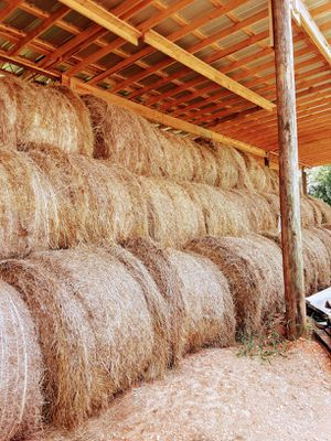 Fertilized Hay Or Non Fertilized Hay for Sale in Valley Grande, AL