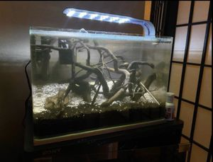 5 gallon Fish tank with free stand for Sale in Garden Grove, CA