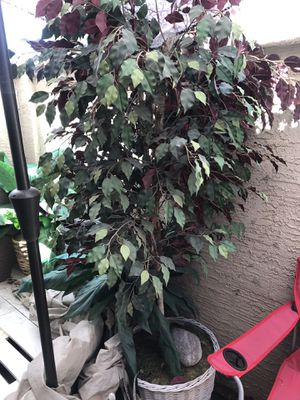 Two large fake plants for Sale in Chandler, AZ