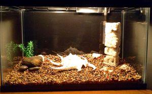 10 Gallon Fish Tank for Sale in Dublin, OH