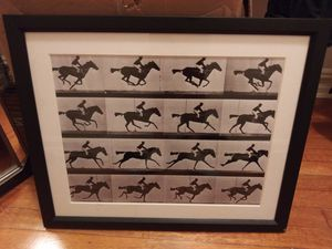 Horse stills 1 thru 16 for Sale in Queens, NY