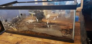 Fish tank for Sale in Buckley, WA