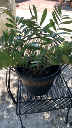Plants with pots for Sale in HAINES CITY,  FL