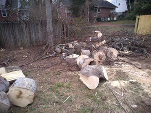 Free Hickory for Sale in Nashville, TN