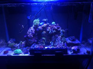 Fish tank for Sale in Hillsboro, OR
