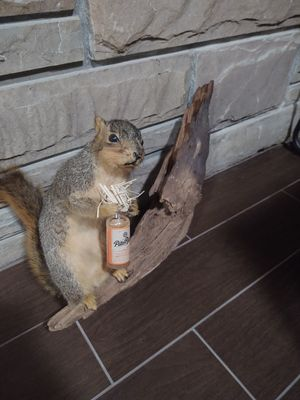 Taxidermy Squirrel on branch w/ rum bottle for Sale in River Grove, IL