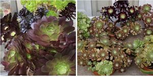Succulents many sizes $1-14 for Sale in Los Angeles, CA