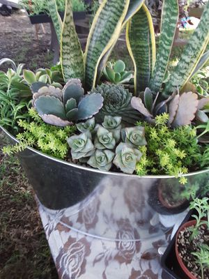 "13"" pot with succulent plants for Sale in Whittier, CA"