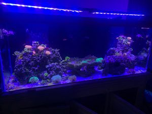 225 gallon saltwater tank and accessories for Sale in Dupo, IL