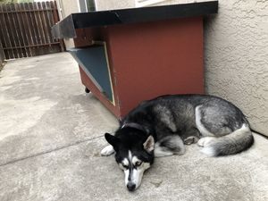 Doghouse for Sale in Sacramento, CA
