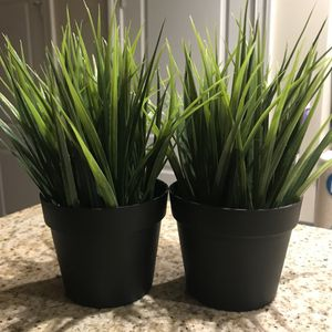Plants / home decor for Sale in Pittsburgh, PA