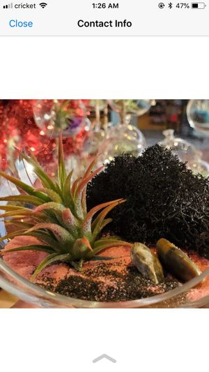 Air plant in globe - Christmas present - succulent for Sale in San Diego, CA