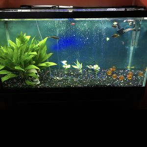 90 Gallon Fish Tank W/ Rocks, Stand, And Light for Sale in Waterbury, CT