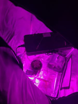 Grow tent with light fan and seeds for Sale in Tualatin, OR