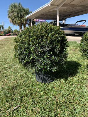 Ball topiary for Sale in Orlando, FL