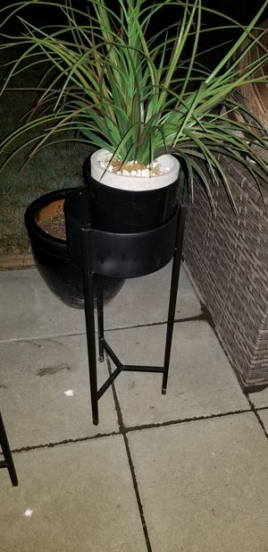 Plant w/ stand for Sale in Corona, CA