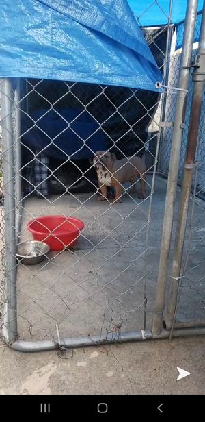 DOG KENNEL for Sale in City of Industry, CA