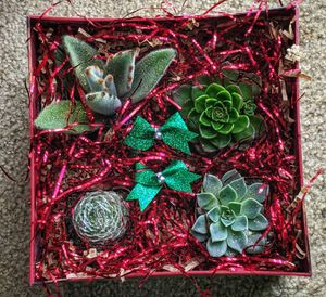 Free Delivery. Succulent Floral Arrangements for Sale in Vancouver, WA