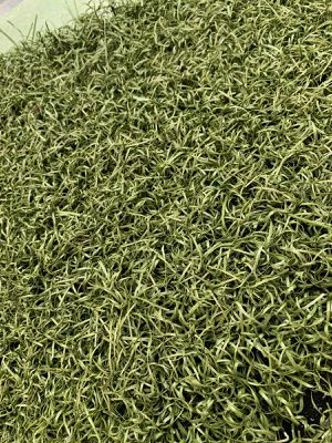 Nice Repurposed Athletic Artificial Grass Turf from sports field in Wilsons, VA for Sale in Wilsons, VA
