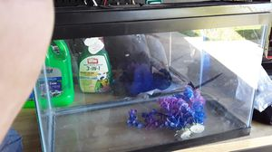 5gal fish tank for Sale in Santa Maria, CA