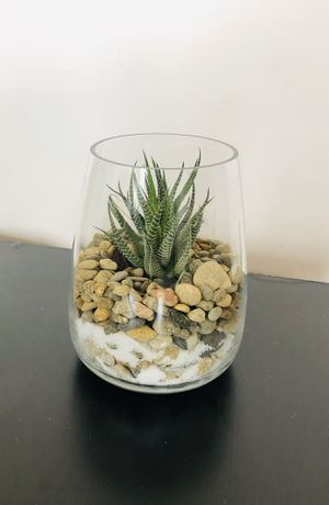 succulent plants (large size) for Sale in Cambridge, MA