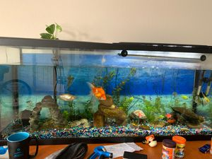 Fish tank for Sale in Greensboro, NC