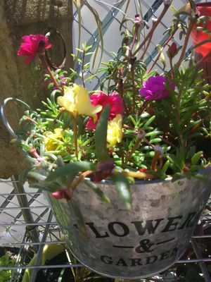 Flowering succulents for Sale in Kissimmee, FL